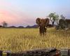 Pack Chasse - Safari Simulator - Screenshot 6