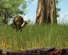 Pack Chasse - Safari Simulator - Screenshot 9