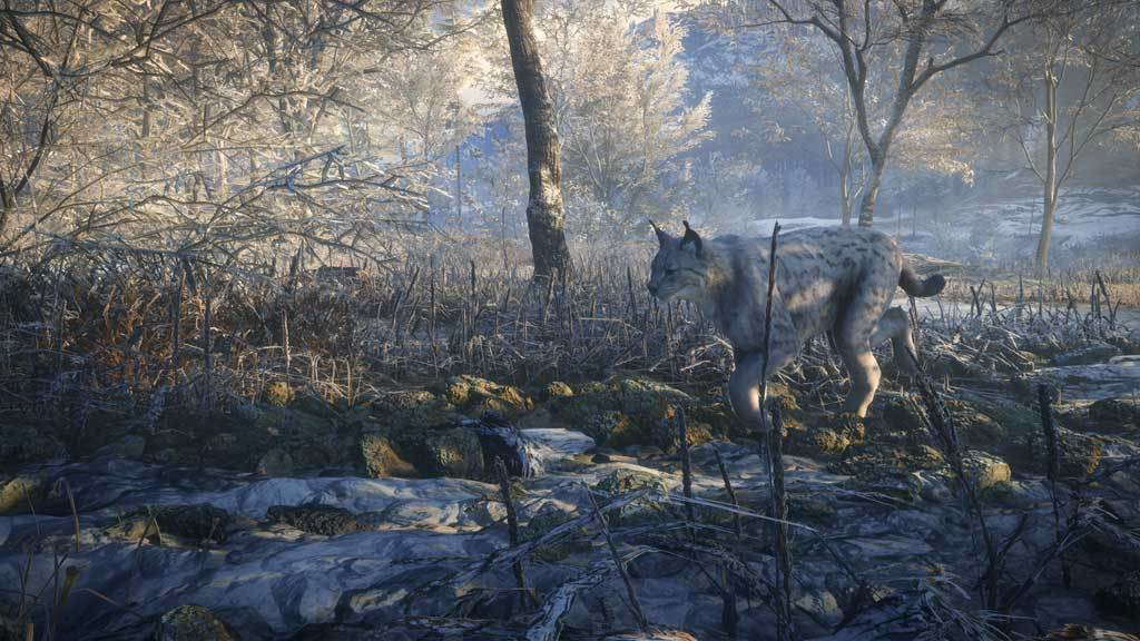 theHunter Call of the Wild - Medved-Taiga (DLC)